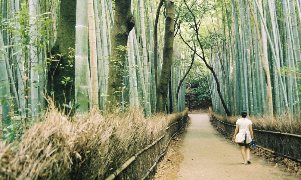 Forest bathing Japan consumer trends 2018